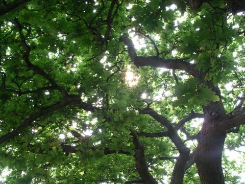 Undertree